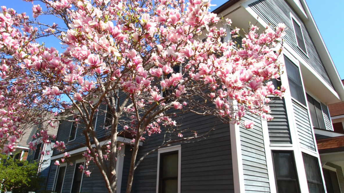 Essential Spring Home Maintenance Activities
